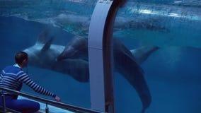 Toon van dolfijnen op het Centrum voor Oceanografie en Marine Biology Moskvarium-de video van de voorraadlengte stock videobeelden