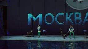 Toon van zeeleeuw op het Centrum voor Oceanografie en Marine Biology Moskvarium-de video van de voorraadlengte stock video