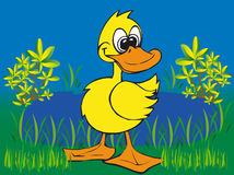 Toonimal Duck-Vector Royalty Free Stock Images