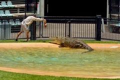 Toont de mensen voedende krokodil tijdens krokodil bij dierentuin in Australië royalty-vrije stock foto's