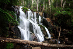 Toorongo falls. Toorongo falls in Victoria, Australia Royalty Free Stock Images