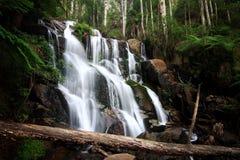Toorongo falls. Royalty Free Stock Images