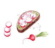 Toost met radijs en avocadopuree Stock Afbeeldingen
