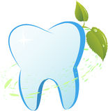 Tooth. With a mint branch Vector illustration Royalty Free Stock Images