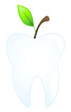 Tooth. Vector logo of human molars with germinating green leaves Stock Photography