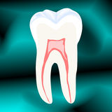 Tooth Royalty Free Stock Photo