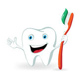Tooth. Cartoon tooth character holding toothbrush Royalty Free Stock Image