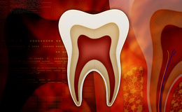 Tooth. Anatomy of the tooth in colour background stock photo