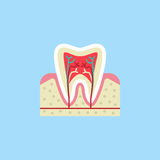Tooth anatomy flat icon Royalty Free Stock Images