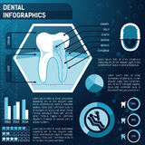 Tooth anatomy Stock Photography