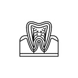 Tooth anatomy line icon. Dental and medicine, vector graphics, a linear pattern on a white background, eps 10 Stock Illustration