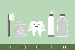 Tooth best friend Stock Photos