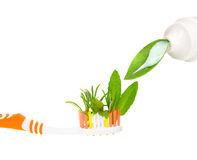 Tooth Brush. With fresh herbs Royalty Free Stock Photos