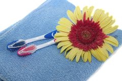 Tooth-brushes and flower Stock Images