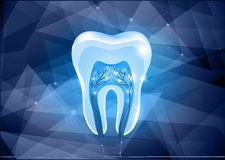 Tooth cross section design Royalty Free Stock Photos
