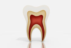 Tooth Royalty Free Stock Image