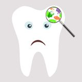 Tooth Germs and Bacteria Stock Photo
