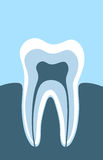 The tooth Royalty Free Stock Photo