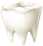 A tooth Royalty Free Stock Photography