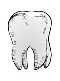 Tooth,  image Royalty Free Stock Image