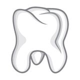Tooth isolate on white Royalty Free Stock Photo