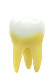 Tooth isolated on white background Royalty Free Stock Photo