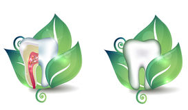 Tooth and leaf symbol set Royalty Free Stock Photography