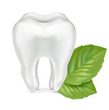 Tooth with leaves isolated on white Stock Photography