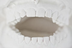 Tooth model. Dental plaster tooth model in white stock photos