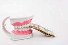 A tooth model with dollar notes Royalty Free Stock Photography