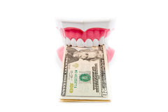 A tooth model with dollar notes Stock Image