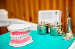 Tooth model Royalty Free Stock Photo