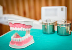 Tooth model Royalty Free Stock Image
