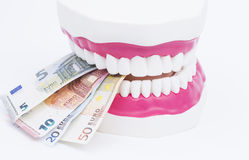 Tooth model with money. A tooth model with euro notes isolated on white background Stock Images