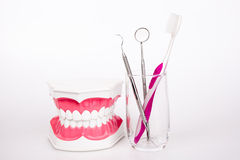 Tooth model with  toothbrush Stock Photography