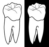 Tooth With Root Graphic Style Royalty Free Stock Photo
