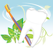 Tooth, toothbrush and mint sprig Royalty Free Stock Photography