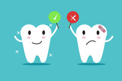 Tooth with True and False sign. Royalty Free Stock Photos