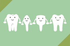 Tooth type - incisor, canine, premolar, molar. Dental cartoon vector, tooth type - incisor, canine, premolar, molar Stock Photography