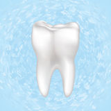 Tooth Vector illustration. Isolated. Stock Image