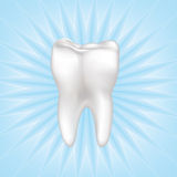 Tooth Vector illustration. Isolated. Royalty Free Stock Image