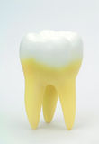 Tooth on white background. Stock Image