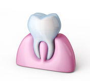 Tooth. White tooth  on a white background Stock Photography