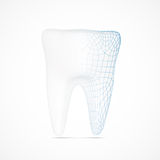 Tooth wireframe Royalty Free Stock Photography