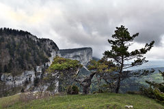 Tooth of wolf, france Royalty Free Stock Photos