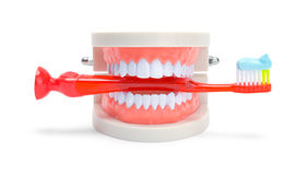 Toothbrush with Dental Teeth Stock Image