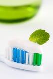 Toothbrush di menta fresco fotografie stock libere da diritti