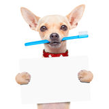 Toothbrush dog Royalty Free Stock Images