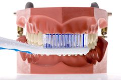 Toothbrush and false teeth Royalty Free Stock Images