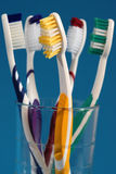 The toothbrush family.  Stock Photography